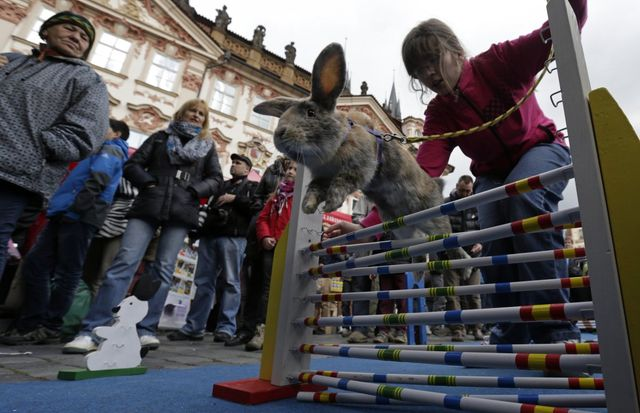 on-april-14-people-watch-a-rabbit-jumping-over-an-obstacle-at-the-traditional-easter-market-at-the-old-town-square-in-prague