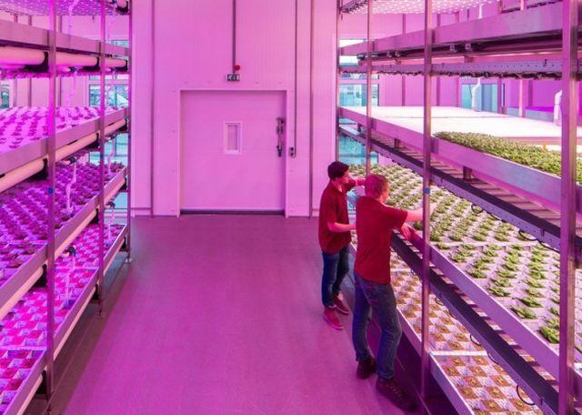 Първата градска ферма без почва ще се появи във Великобритания