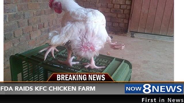 ГМО ли?!! Четирикраки кокошки мутанти били доставяни до заведения и магазини