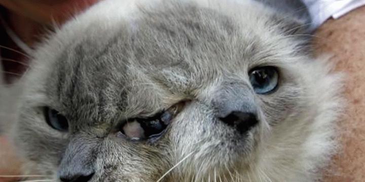 Вълнуващата съдба на двуглавия котарак  Франк и Луи (видео)