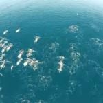 Невероятно : Уфолози заснеха цяло ято русалки (видео)