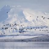 Daily Star: Нашествието на руснаците в  Америка ще започне с превземането на Аляска