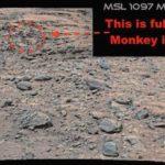Уфолози откриха жива маймуна на Марс