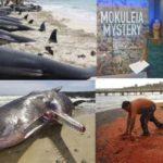 Мистерия: Милиони мъртви морски създания всеки ден се изхвърлят на брега на Хаваи (видео)