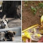 Тези кучета пазели малко съкровище, изоставено да умре в гората