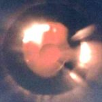 Това е, може би,  най-ясната снимка на НЛО от всички заснети досега