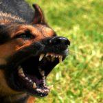 Никога не убивайте кучето! - притча за осъждането
