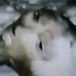 Видео с извънземно същество, заловено в  Канада,  се появи в интернет