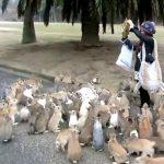 Знаете ли къде се намира Островът на зайците? (видео)