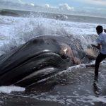Фауната измира 1 000 пъти по-бързо от очакваното. За половин век са загинали 67% от всички животни на Земята...