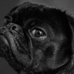 Кучетата   могат   с точност да определят дали даден човек е достоен за доверие!
