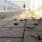 Зомбирани мишки се самоубиват масово в Холандия (видео)