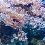 В следващите 20 години могат да изчезнат до 90% от всички коралови рифове на планетата