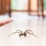 Защо никога не трябва да убивате паяците у дома си
