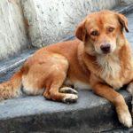 Нидерландия е първата държава в света без нито едно бездомно куче!
